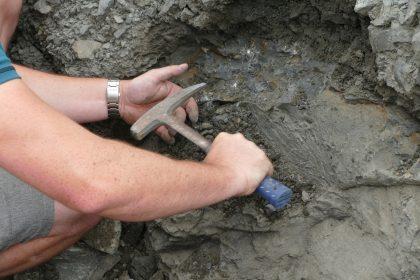 06 Fossilien 420x280 - Fossilien suchen und präparieren