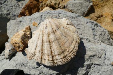 08 Fossilien 375x250 - Fossilien suchen und präparieren