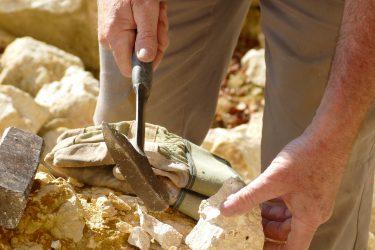 09 Fossilien 375x250 - Fossilien suchen und präparieren