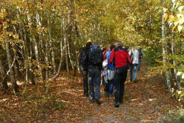 10 Waldwanderung 375x250 - Walderlebniswanderung