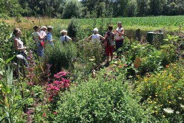 2020 margits garten 375x250 - Tag des offenen Heilkräutergartens