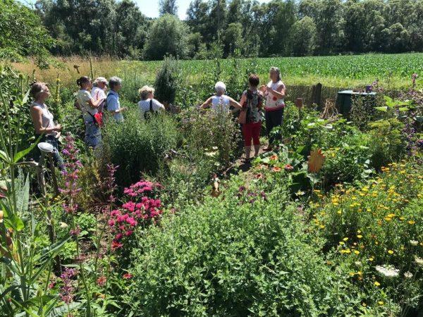 2020 margits garten 600x450 - Tag des offenen Heilkräutergartens