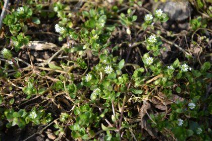 Kräuter6 420x280 - Pflanzen und Knospen im Jahresverlauf