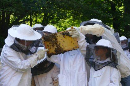 veranstaltunge 2019 bienen 420x280 - Tag des offenen Bienenstocks