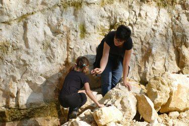 veranstaltungen 2019 fossilien2 375x250 - Fossilien suchen und präparieren