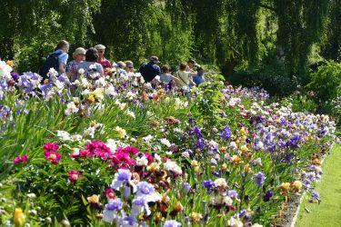 veranstaltungen 2019 irisgarten 375x250 - Irisgarten am Leximihof