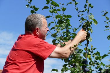 veranstaltungen 2019 obstbaumschnitt 375x250 - Obstbaumschnittkurs